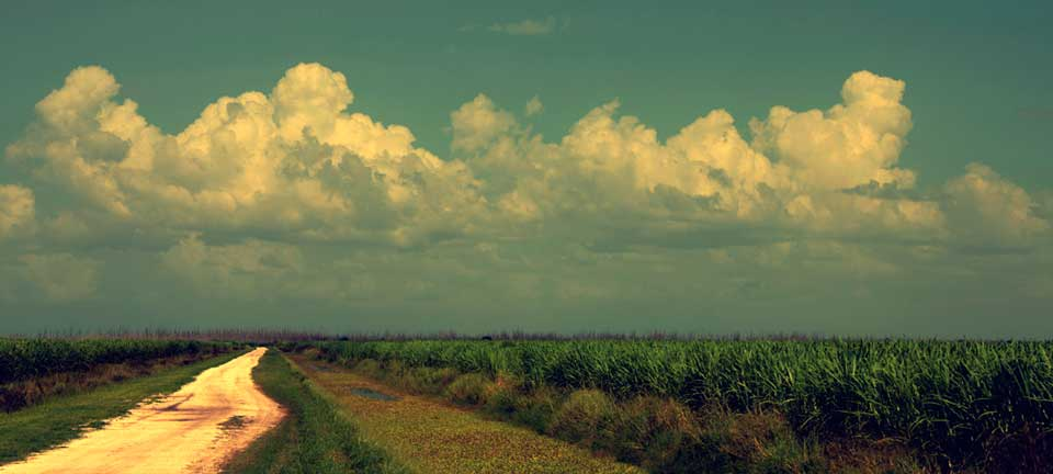 Sugar Cane Fields Okeechobee area