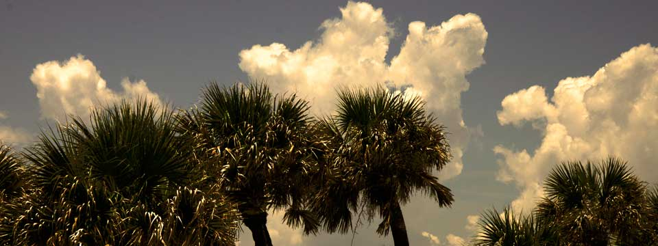 Palm Trees and Clouds Florida Beach Scene