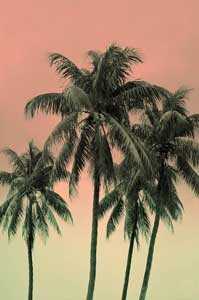 Coconut Palms, Delray Beach FL
